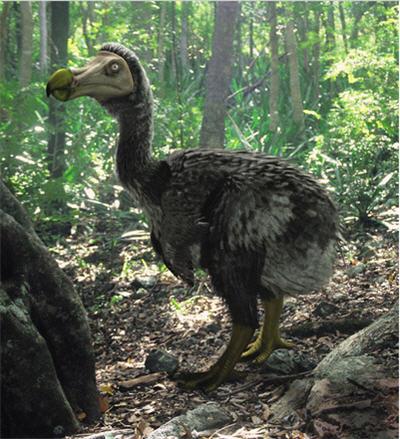 modern_dodo